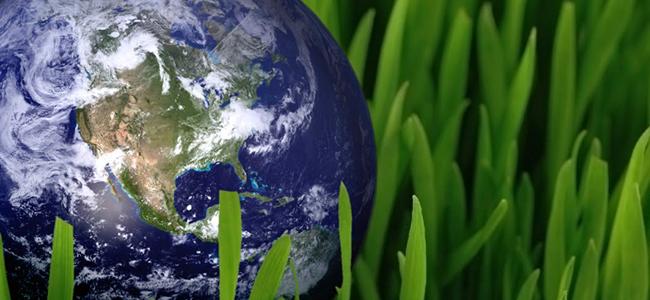 Environmental Service Group 16